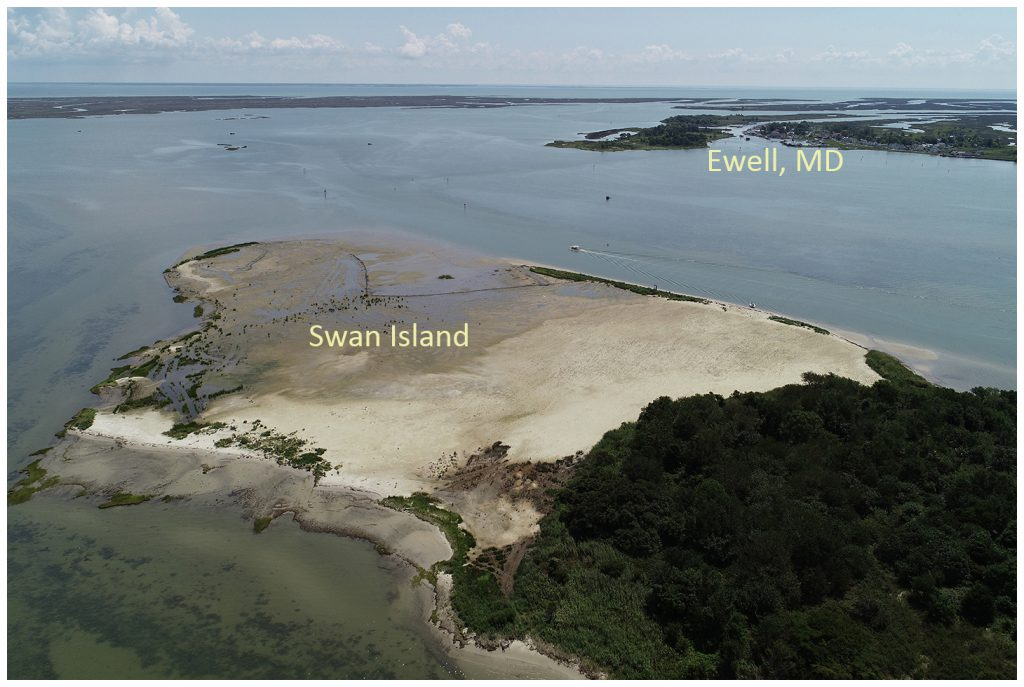 Aerial photo of Swan Island after dredge application and planting, 2019.
