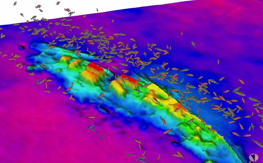 Image showing size and location of fish (acquired with splitbeam echosounder) over the wreck of the USS Schurz (aquired with multibeam echosounder).