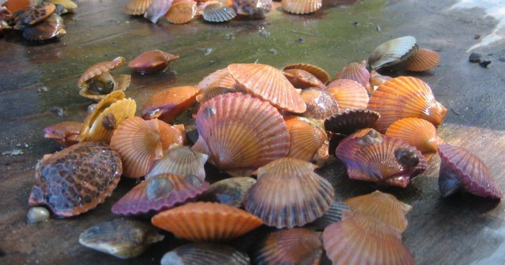 Marine Shellfish Populations Estimated to be at Risk from Ocean Acidification