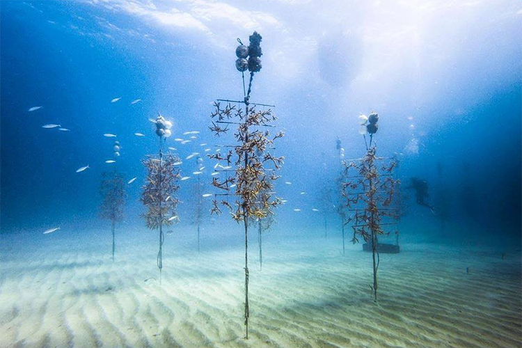 NCCOS Supports 20-year Plan to Restore Seven Coral Reefs in Florida Keys