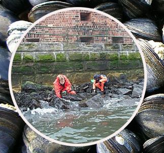 Sampling for contaminant levels in mussels, Image by Kimani Kimbrough, NOAA