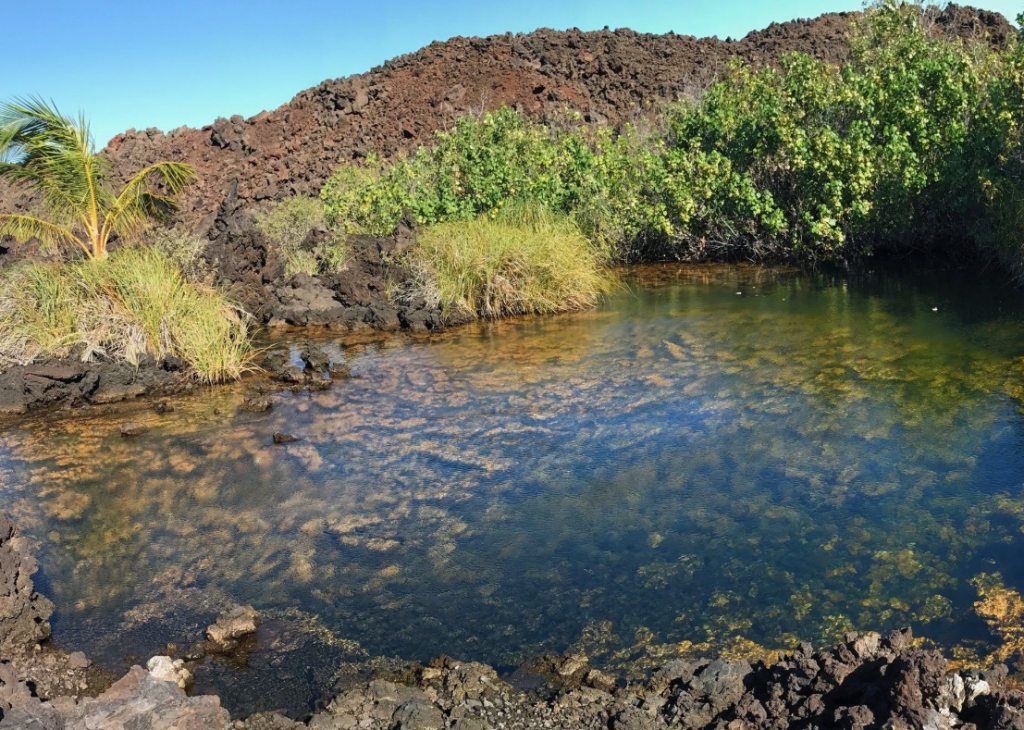 Online Tool Visualizes Impacts of Sea Level Rise on Unique Coastal Pools and Fishponds of Hawai'i