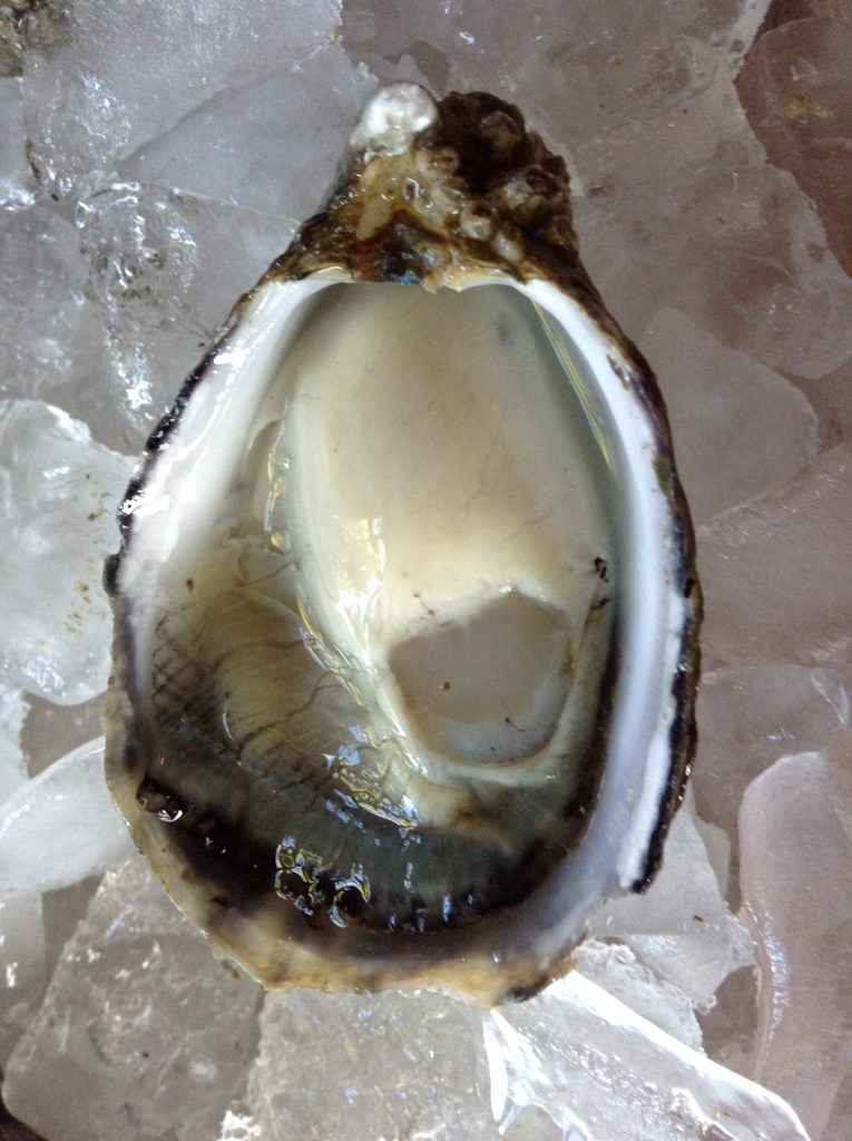 NOAA Algal Toxin Study Supports U.S. Effort to Restore Shellfish Trade with European Union