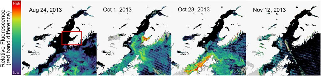 NCCOS Publishes Findings on 2013 Karenia mikimotoi Harmful Algal Bloom in Alaska
