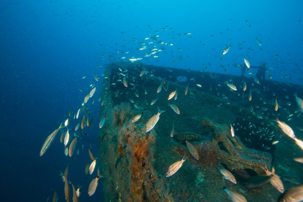 NOAA Study Finds Artificial Reefs Enhance Fish Communities, Solutions are Location-specific