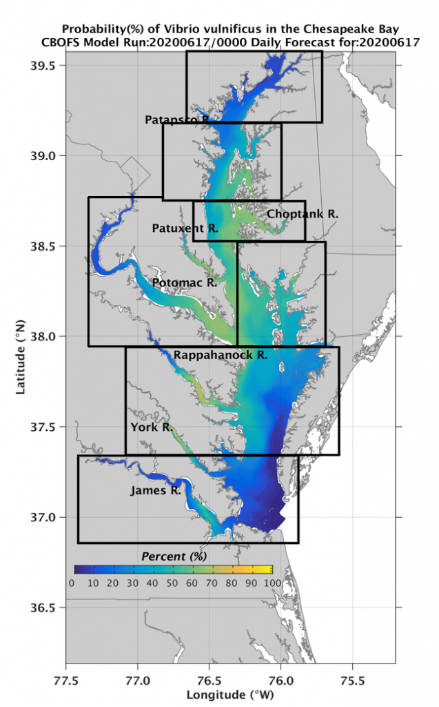 NCCOS Forecast Predicts Occurrence of Pathogenic Vibrio Bacteria in Chesapeake Bay in 2020