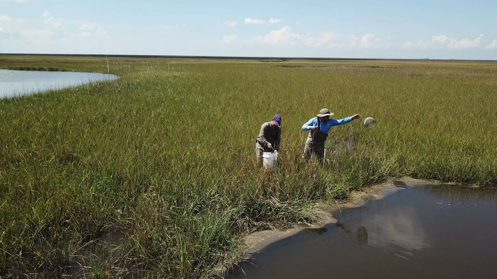 Dr. Michael Polito from Louisiana State University deploys pond trap in Louisiana marsh, 2019.