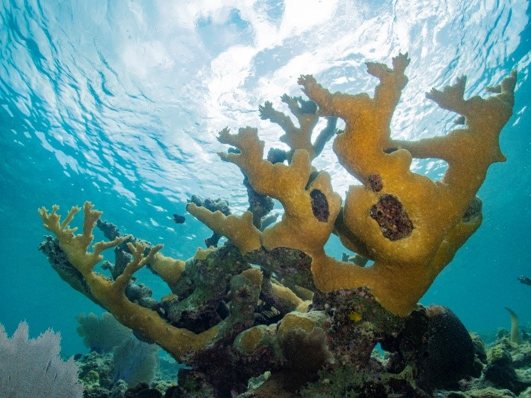 New Research Shows Potential Impacts of Climate Change on Threatened Coral Species