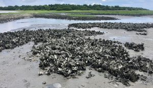 "Evaluating Wave Impact Reduction and Shoreline Protection Provided by ""Oyster Reef Living Shoreline Projects"""