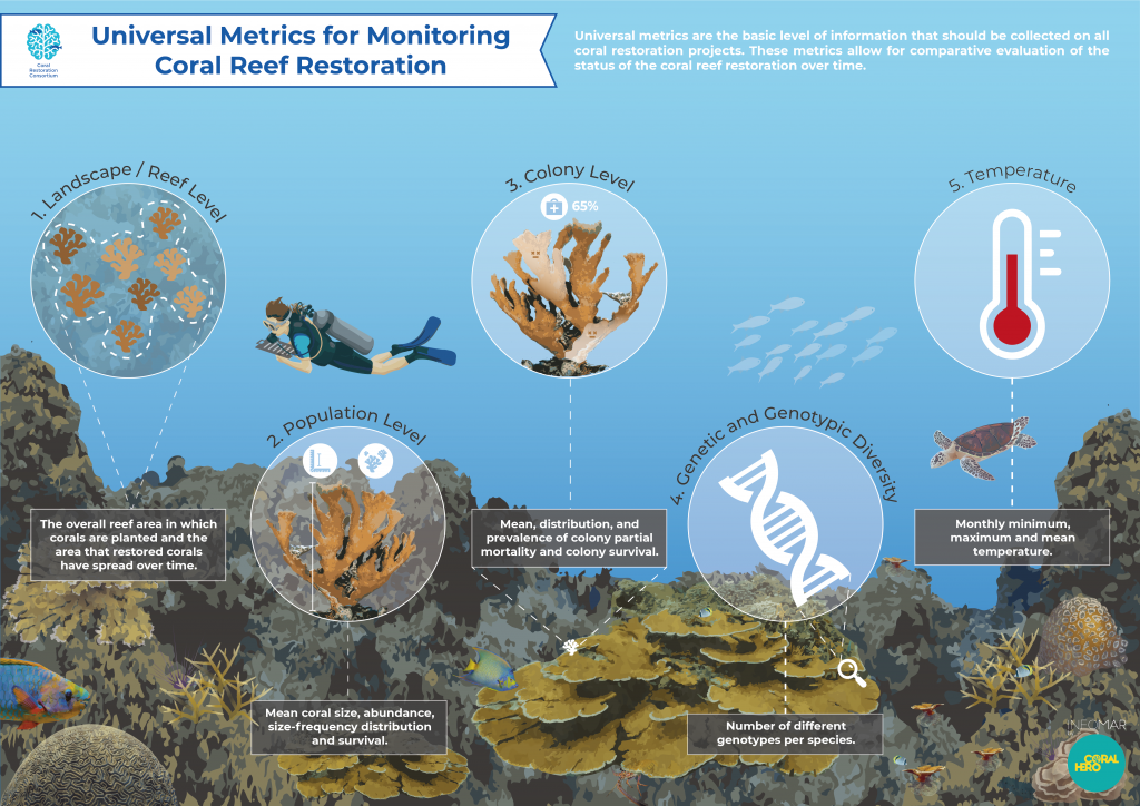 NOAA Supports Development of a Universal Guide for Evaluating Coral Restoration Success