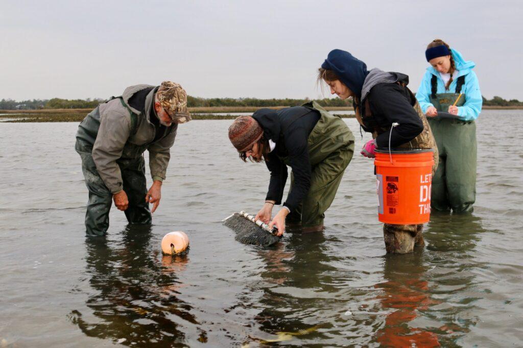 NCCOS Research Informs Oyster Aquaculture Siting in North Carolina Estuaries