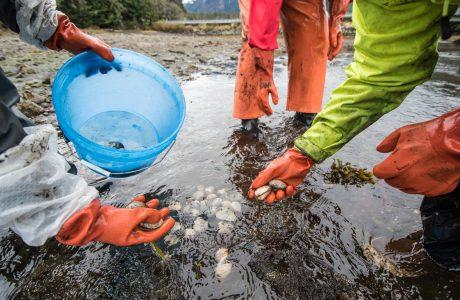 NCCOS Supports Inception of Harmful Algal Bloom Monitoring Networks for Alaska Natives