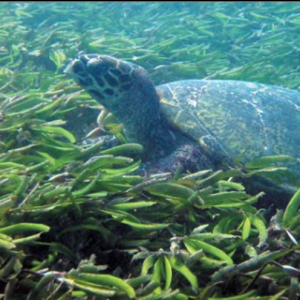 Predicting the Impacts of Climate Change on Seagrass Ecosystems