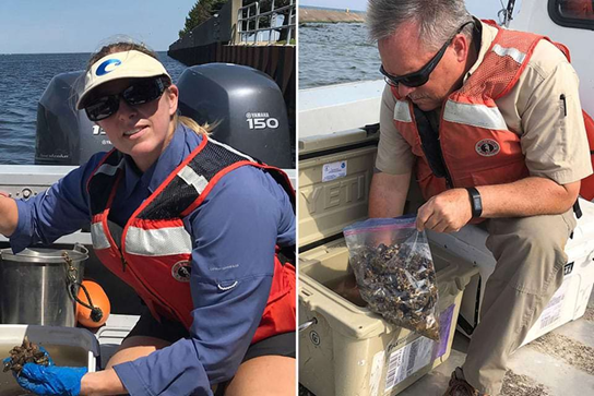 NOAA Evaluates Using Mussel Watch Program to Monitor Microplastics