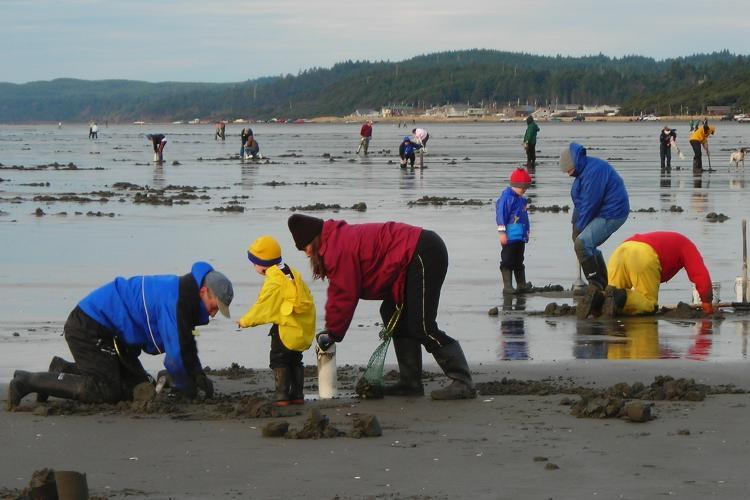 Marine Heatwaves Fuel Harmful Algal Blooms Off US West Coast