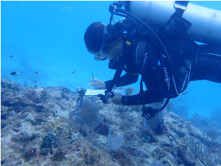 NCCOS-supported Research Aids Site Selection for Coral Restoration