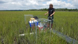 Location, Inundation, and Nitrogen Availability Drive Salt Marsh Carbon Sequestration Rates and Response to Fertilization