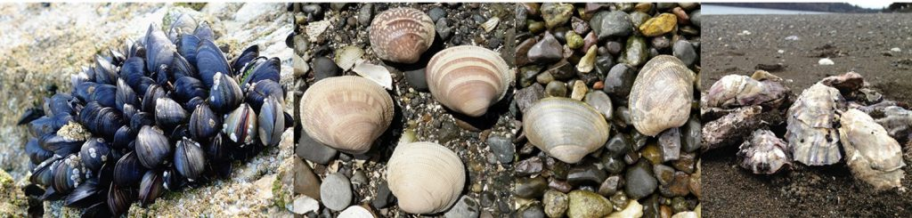 New Method Provides for Fast and Accurate Determination of Marine Biotoxins In Washington Shellfish