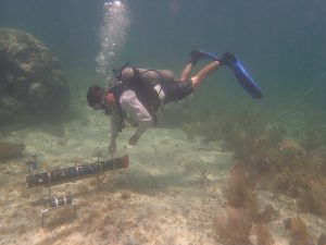 Hypoxia in Tropical Marine Ecosystems, the Understudied Stressor