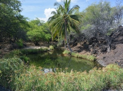 New Tools Address Threats to Anchialine Pools in Hawaii