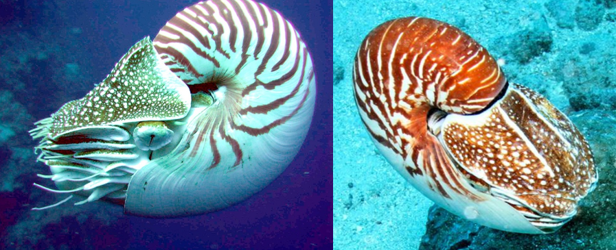 Temperature and Oxygen Tolerances of Marine Species Predict their Distributions
