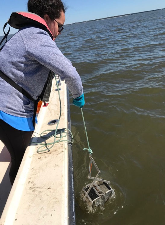 Magarette Bayrón-Arcelay collects a sediment sample from a Gulf of Mexico estuary.
