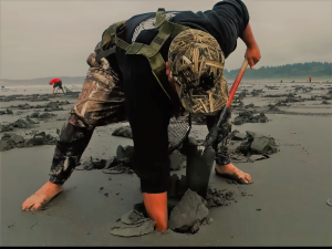 HAB Bulletin Supports Quinault Tribal Access to Razor Clams After Algal Toxin Closure