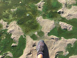 New Study Describes Transport of Toxic Freshwater Cyanobacteria to California's Coastal Ocean