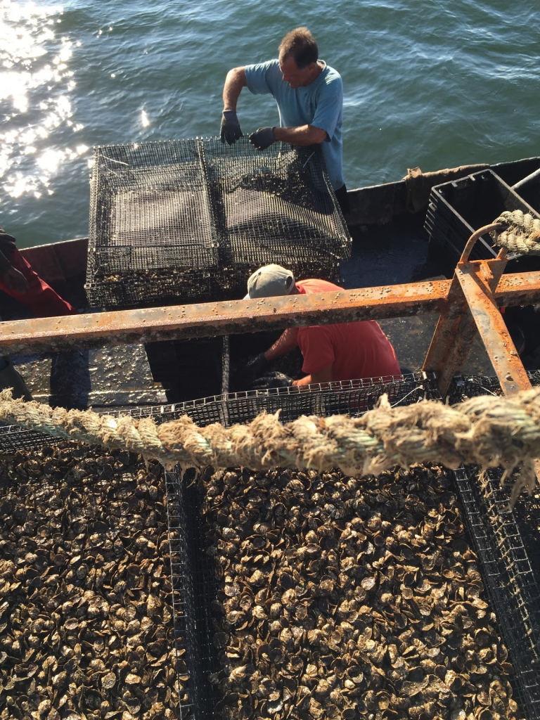 NOAA, Partners Develop Novel Approach to Shellfish Aquaculture Nutrient Removal Valuation