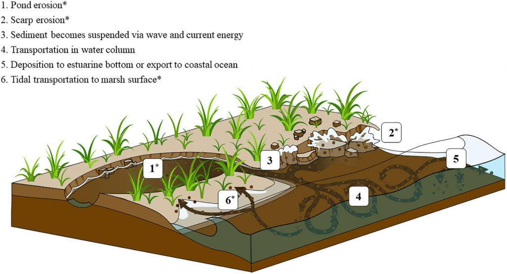 Research Fills Gap in Understanding Greenhouse Gas Emissions from Salt Marshes
