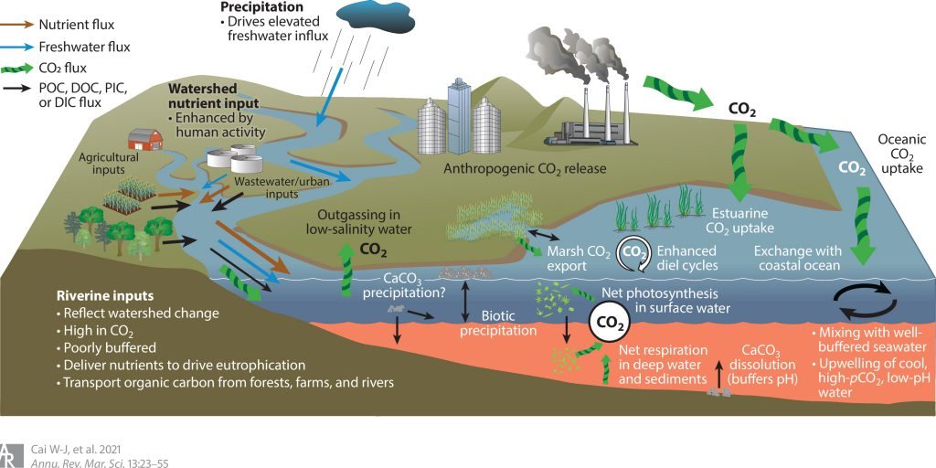 Study Reviews Causes of Acidification in Large Estuaries
