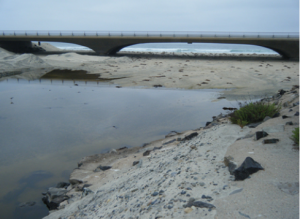 Wetlands in Intermittently Closed Estuaries Can Build Elevation to Keep Pace With Sea Level Rise