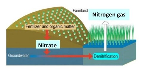 Bacterial Removal of Nitrogen, Methane from Gulf Dead Zone Outpaced by Inputs