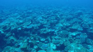 New Publication Shows Distribution of Threatened Coral Species in Mesophotic Reefs