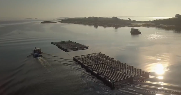 Bangs Island Mussels facility, Casco Bay, Maine. Harmful algal blooms and ocean acidification are threats to shellfish aquaculture.