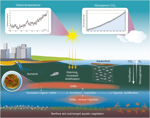 Harmful algal blooms, ocean acidification, and other environmental stressors co-occur in coastal ecosystems, threatening marine and aquatic resources and the human communities that rely on them.