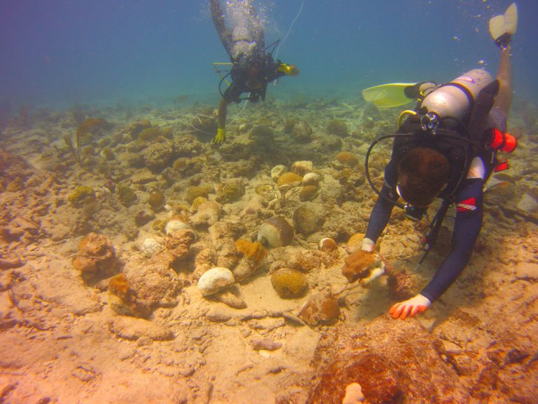 Determining the Flood Protection Benefits of Coral Reefs in Florida and Puerto Rico