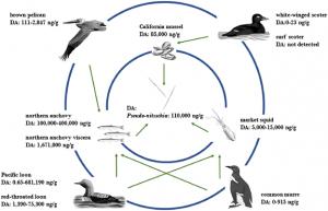 Algal Toxins Found in U.S. Seabirds
