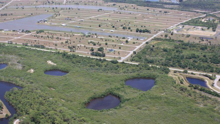 A landscape photo of Sport fish nursery habitat and coastal urbanization