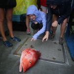 A woman points at a half-eaten red snapper as an example of depredation.