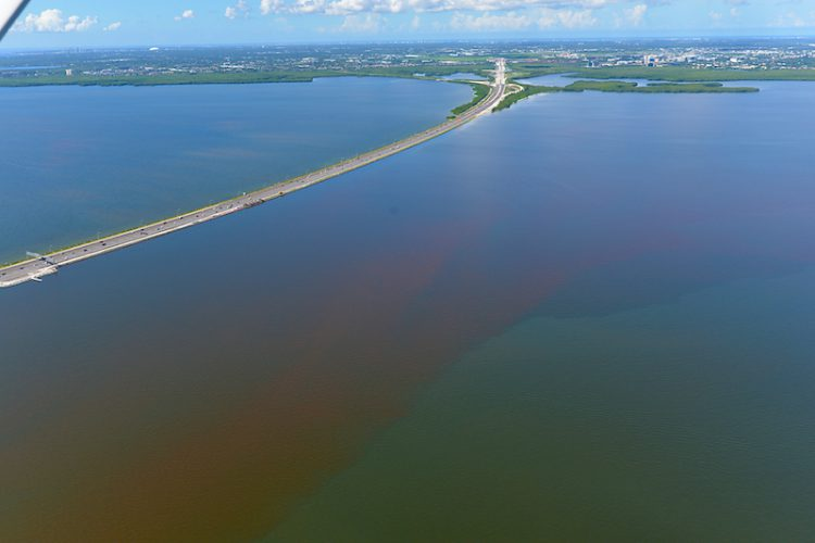 An aerial photograph of a P. bahamense bloom in Old Tampa Bay from July 2021.