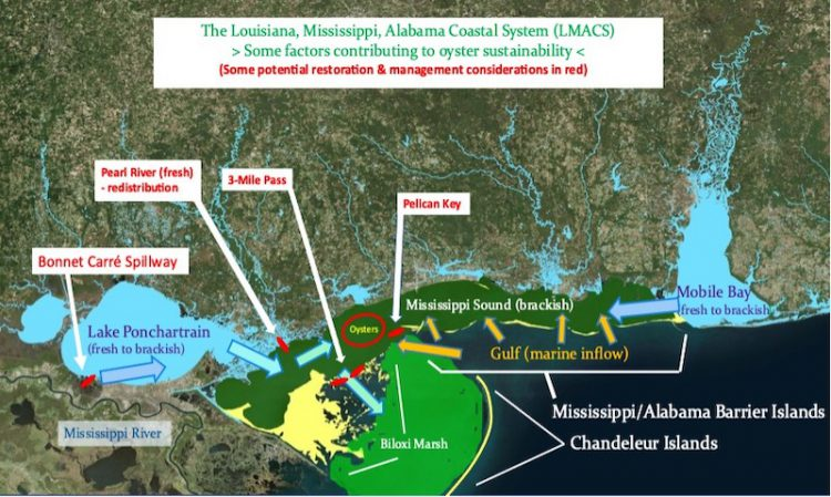 A graphic displaying factors that contribute to oyster sustainability in the Louisiana, Mississippi, Alabama Coastal System